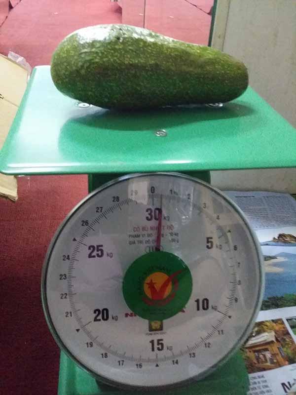 Tặng 1kg quả bơ nhà trồng khi mua giày khiêu vũ Bơ